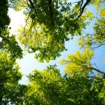 green leafy trees and sky